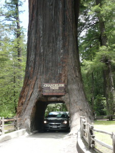 chandelier tree california @ journeylism.nl