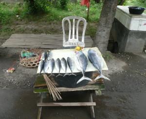 'Fish store'
