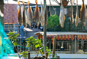 tai o drying fish lantau hong kong @ journeylism.nl