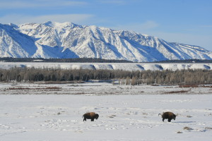 Around the corner: Grand Teton National Park