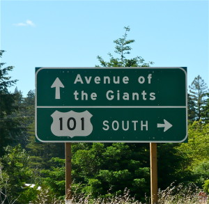 avenue of the giants california usa @ journeylism.nl