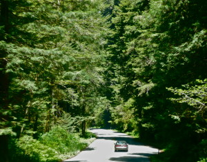 avenue of the giants california usa state route 254 @ journeylism.nl