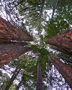 jack london house of happy walls california redwoods @ journeylism.nl