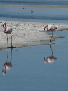 Salt lakes