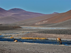 Lakes and Vicunas